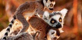 , Madagaskar
